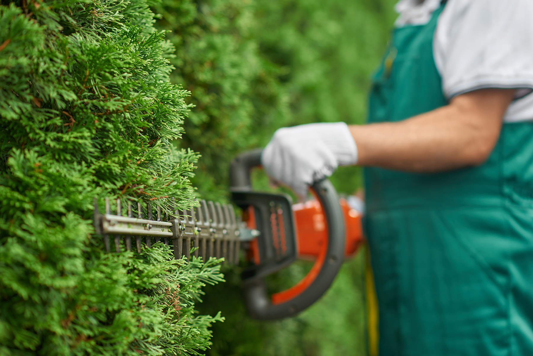 Tree and Hedge Trimming By Professionals Who Really Care